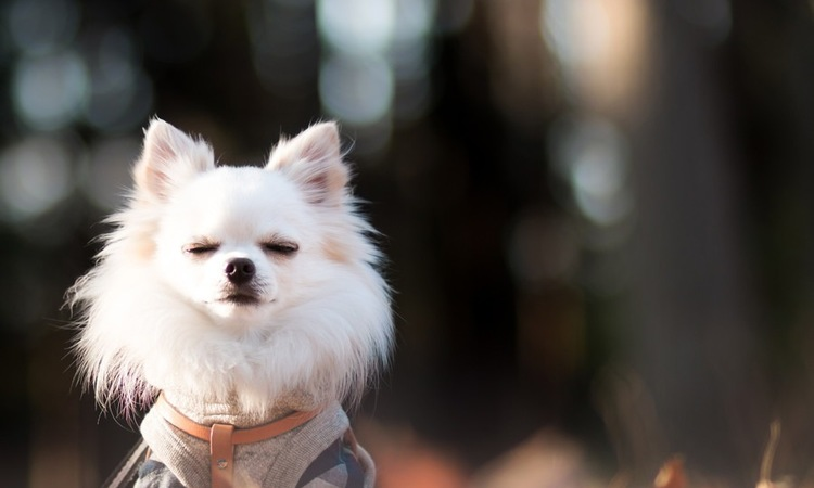 犬の心と体をほぐす「Tタッチ」の効果とやり方
