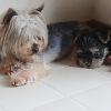 幸せドッグライフ~犬と幸福に暮らすための心構え~