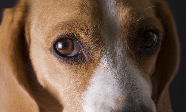 犬が挙動不審になっている時の心理4つ