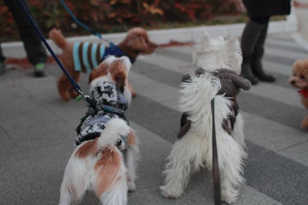犬が下痢したら?原因と家庭でできる対処法