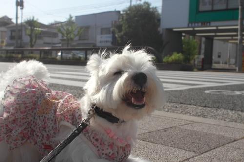 犬の生理痛の症状に関するよくある質問【まとめ】 …