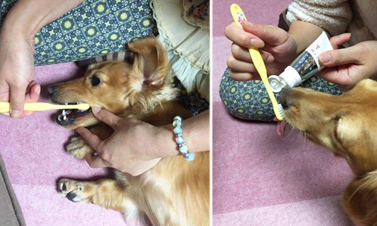 歯磨き教室に参加して痛感した、正しい歯磨き方法と口腔ケアの必要性