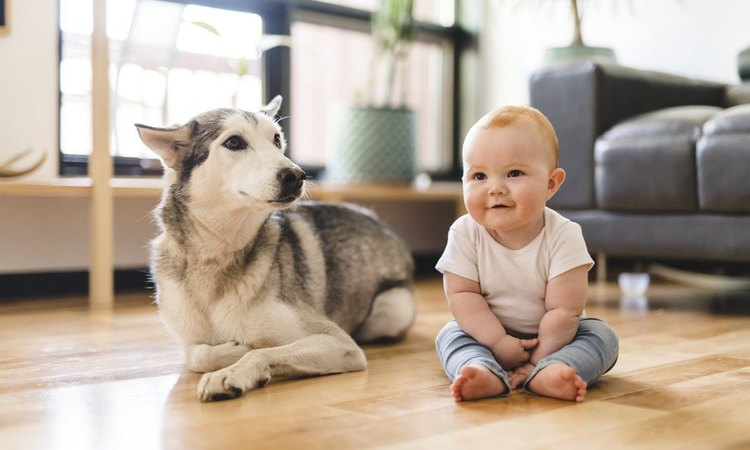 愛犬から目を離してはいけないタイミング3つ