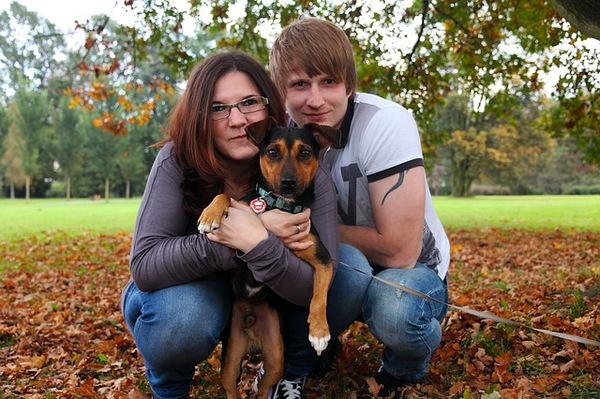 犬のシェアは捨て犬減少にも役立つサービス