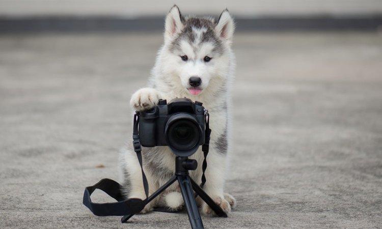 犬を撮影できる写真スタジオおすすめ4選【関東編】