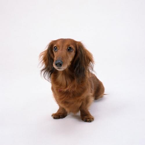 老犬の健康管理で気を付けること4つまとめ!ご飯、運動など