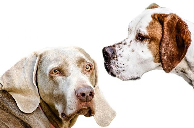 犬が顔を背けるときはそっとしておいて…不用意に触れてはいけない4つの瞬間