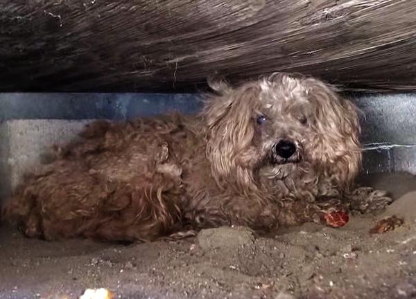 犬を保護し続ける団体「Hope For Paws」の活動に思わず涙(まとめ)