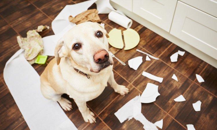 犬が混乱する飼い主の行為3選