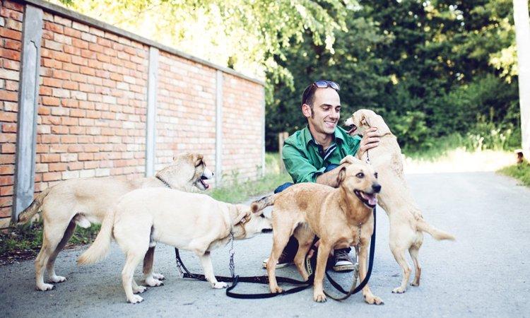 犬好きだけじゃ務まらない!犬に携わる仕事に向いている人の3つの特徴