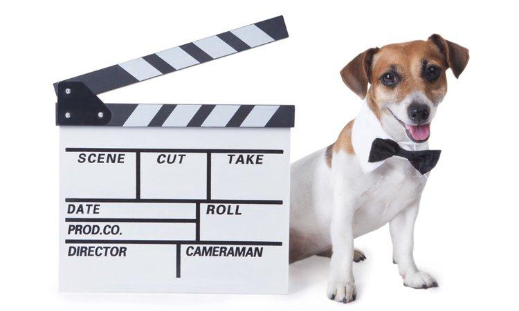 戌年だからこそ観ておきたい「犬の映画」4選