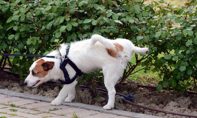 犬がマーキングをする3つの心理とその対処法