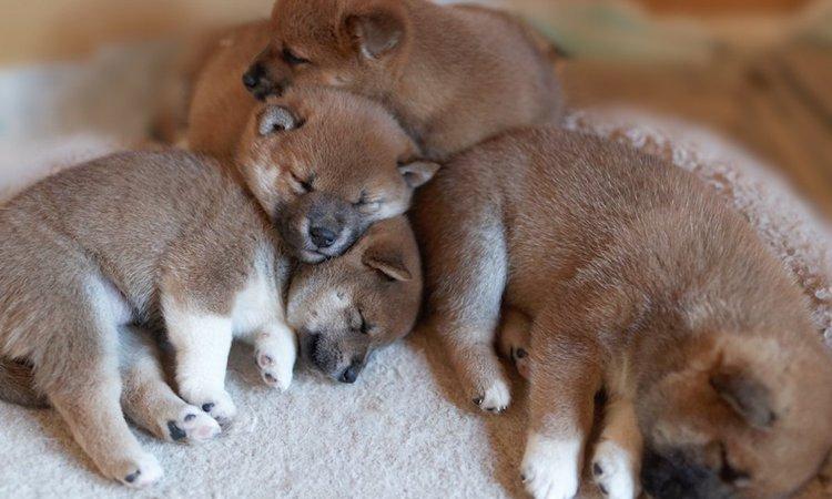 犬同士が寄り添って寝ている時の心理5つ