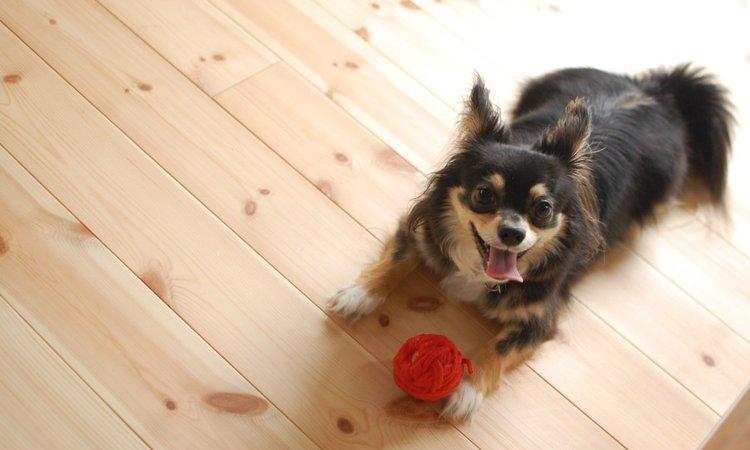 マンションで飼いやすい犬種7選