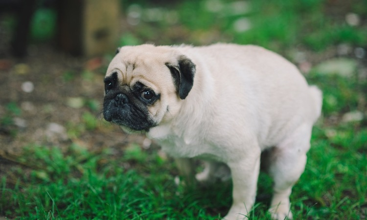 犬が視線を飼い主に向ける3つのシチュエーション
