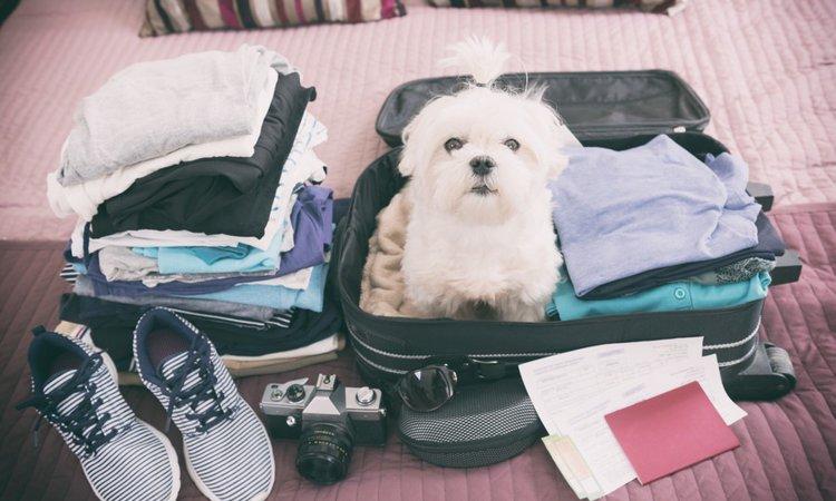 愛犬と一緒に旅行するメリットとデメリットを考える