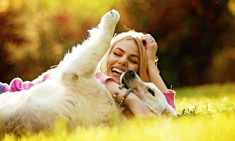 犬用サプリランキングTOP5!無理なく続けて健康維持に役立てよう