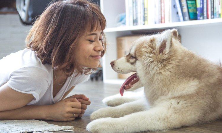 後ろからトコトコ......どうして犬は飼い主の後をついてくるの?