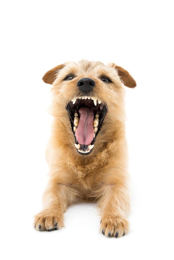 犬の防衛本能による5つの行動や仕草