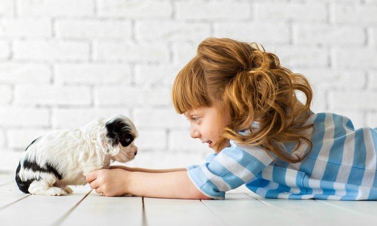 犬に「与えるべきストレス」と「与えてはいけないストレス」
