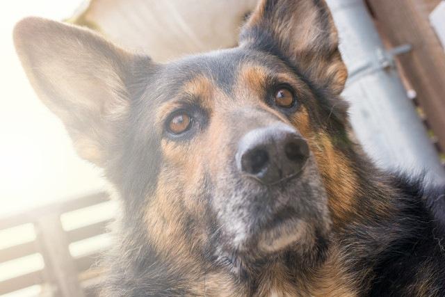 犬は地震を予測できるのか?