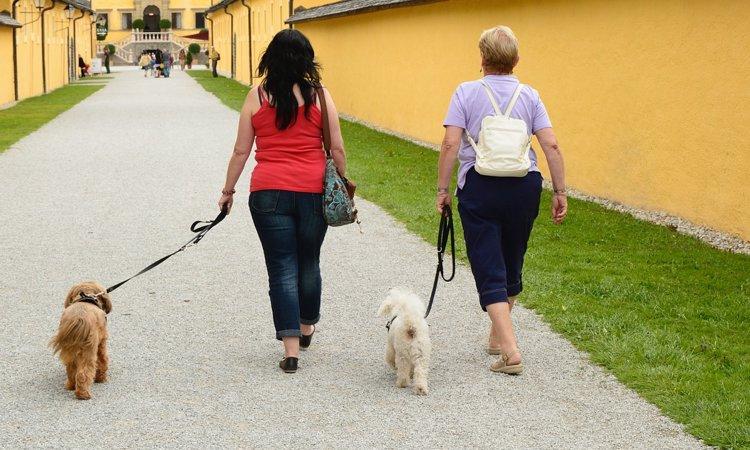 ただの運動や排泄だけじゃない!お散歩がもたらす6つの良いこと♪
