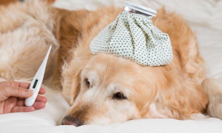 人が感染している「ノロウイルス」は犬にもうつるのか?