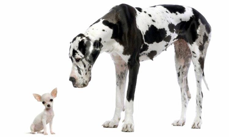 特定危険犬種について ~飼い主に求められる責任と資質~