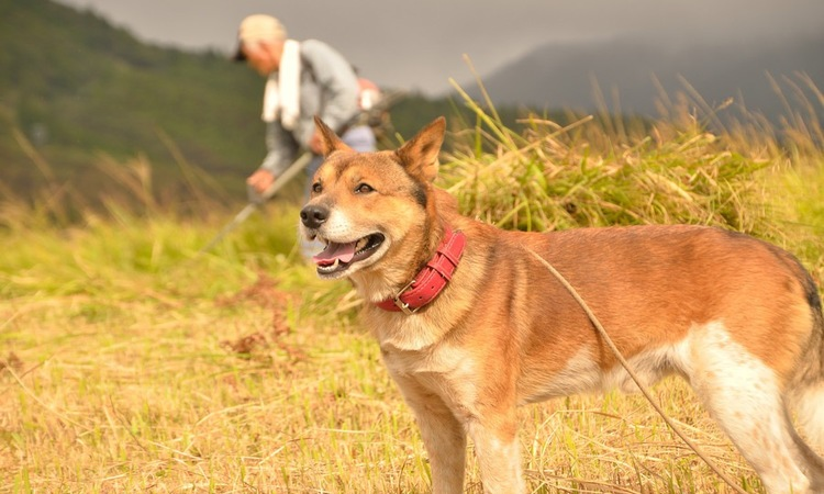 雑種犬の寿命が長いと言われている3つの理由