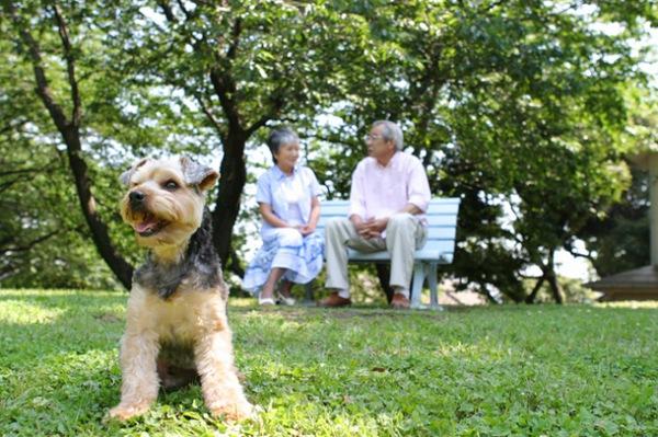 老犬になったら食事と環境を見直そう!