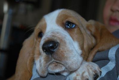 犬の角膜炎について~症状・原因から治療・予防法まで~