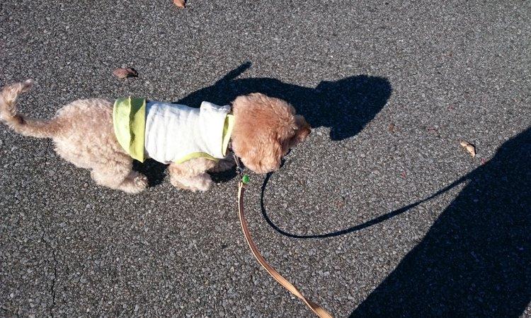 犬をノーリードで散歩させるのは条例違反になる可能性大!