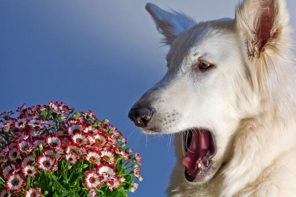 犬がフレーメン反応が起こす理由とその様子