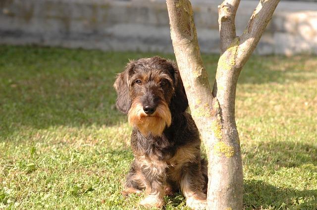 思い出す度に泣けてくる、どんな時でも飼い主に忠実だった愛犬の話。