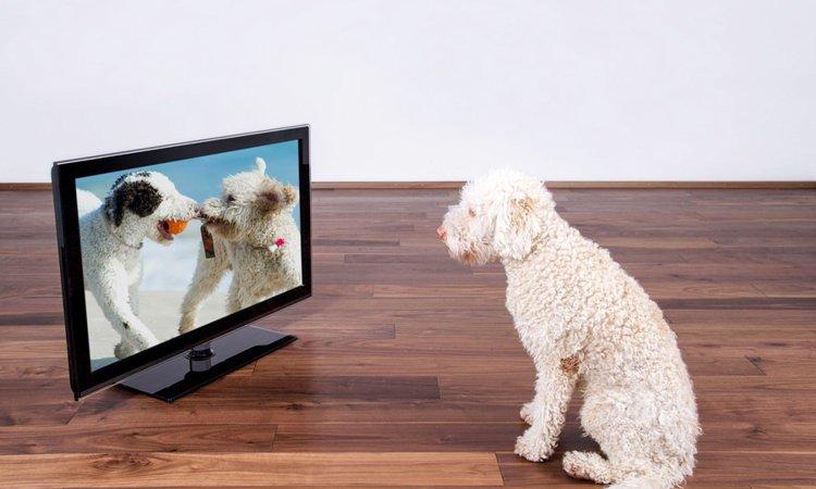 犬がテレビの中の犬に反応する心理3つ