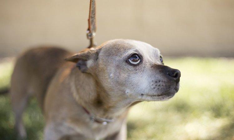 保護犬の社会化、悩む前に知っておきたいこと