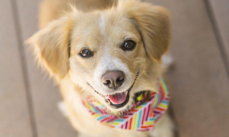 犬が飼い主から「愛されてる」と感じる5つのこと