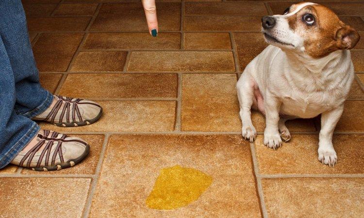 犬が隠れておしっこをするようになる2つの原因とやめさせる方法