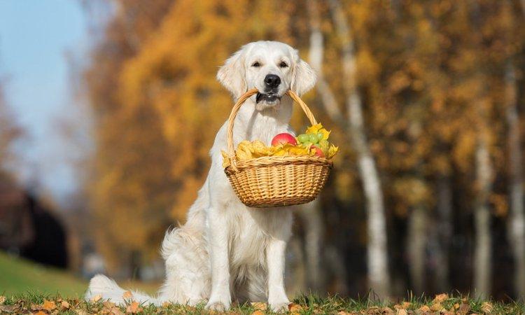 犬が食べても大丈夫な5つの果物
