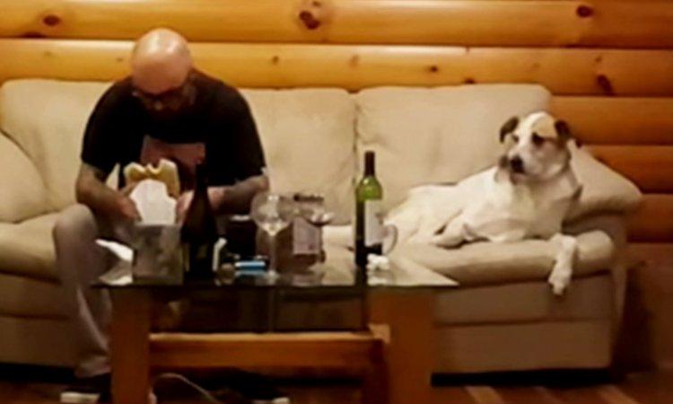 ごはんを食べてる飼い主さんをこっそりチラ見するわんちゃん(まとめ)