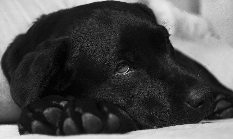 犬の血小板減少症について~症状・原因から治療・予防法まで~