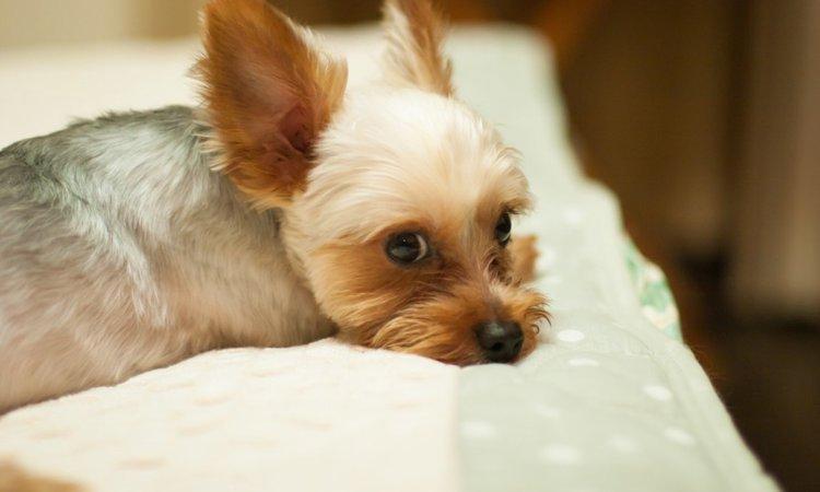 犬の背骨が曲がる原因と家庭でできる対策