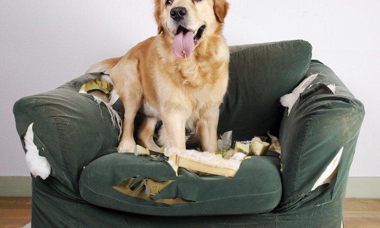 犬を放し飼いするときの3つのルール