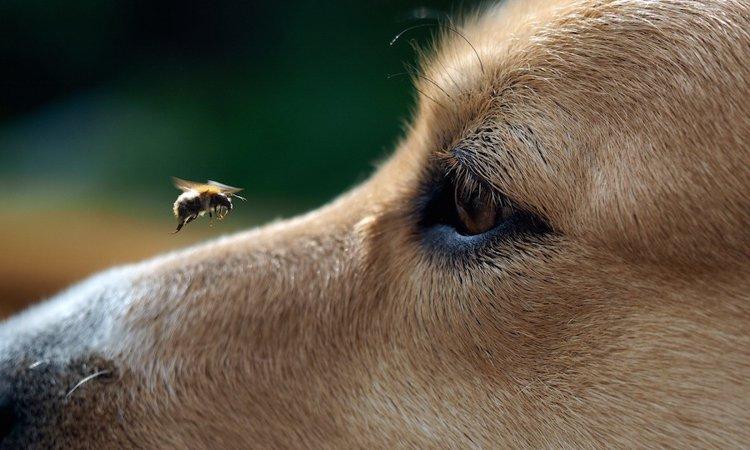 養蜂業の頼もしい助っ人、ミツバチの巣箱の病気を嗅ぎ出す働く犬たち