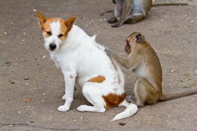 犬猿の仲って実際どうなの?