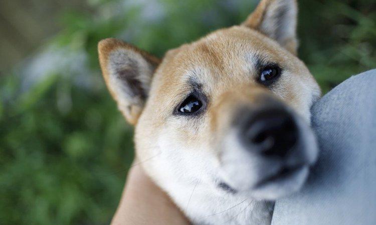 犬が人間に嘘をつくタイミング5つ