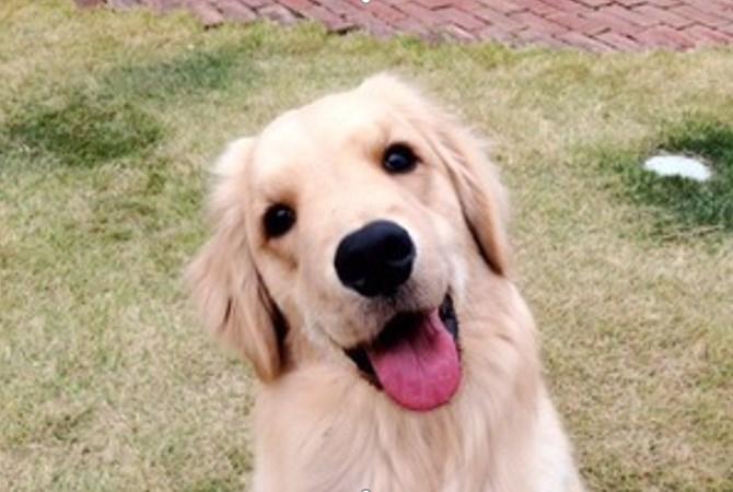 犬が首をかしげる理由と考えられる病気について