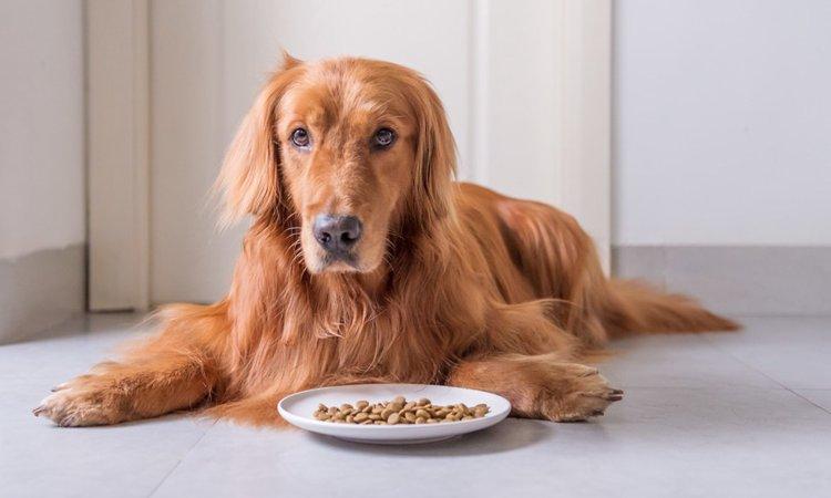 愛犬がご飯を食べない時に確認すべき5つのこと