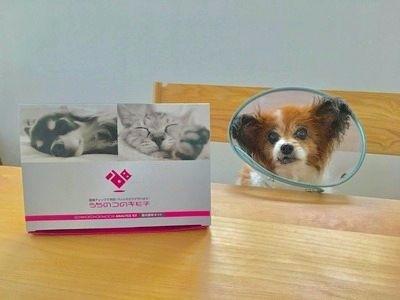「うちのコのキモチ」で愛犬の腸内環境を解析!健康維持につなげよう