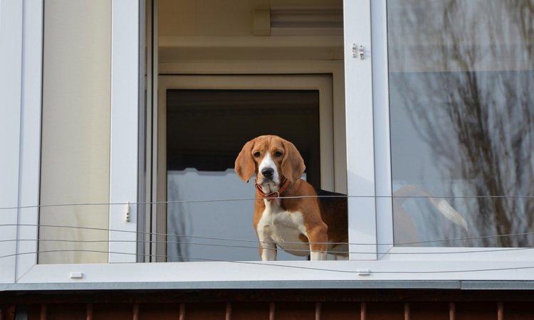 「ペット共生マンション」に住むメリットと注意点
